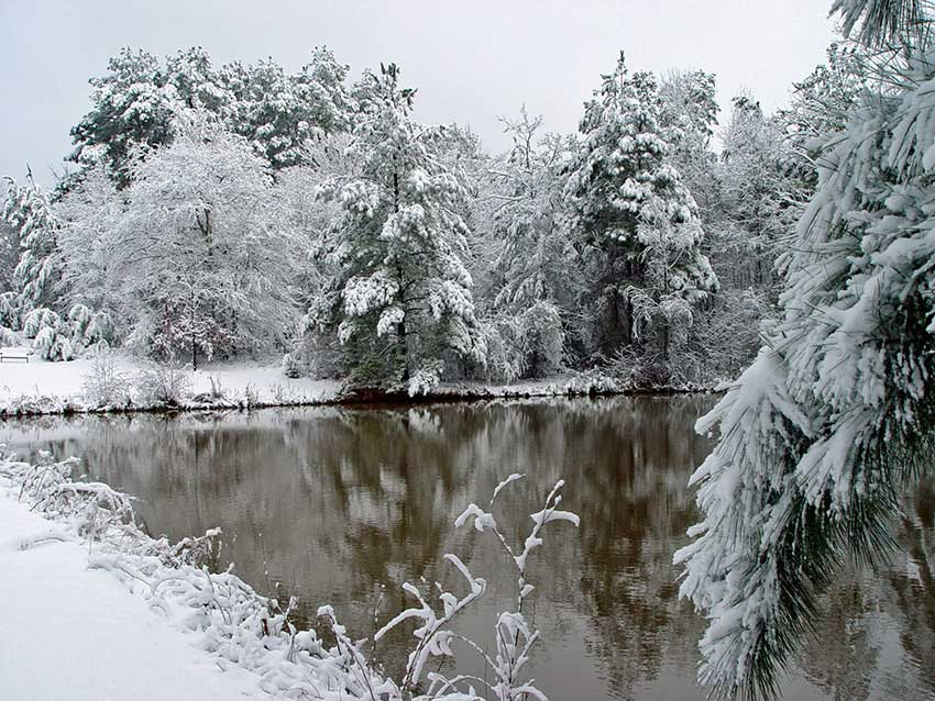 Snow at the pond